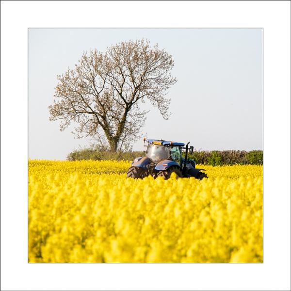 Oilseed Crop by Steve-T