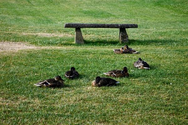 A gathering by Meditator