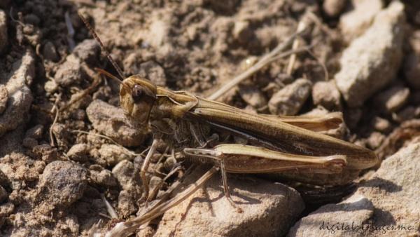 Grasshopper by Alan_Baseley
