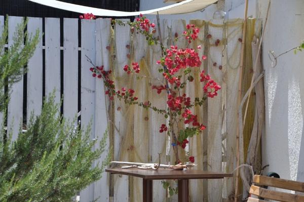 Garden curiosities... by Chinga