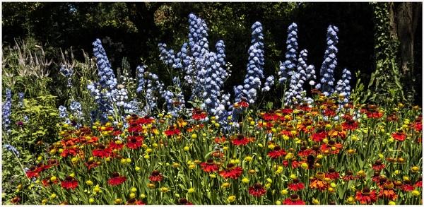 Summer in the garden by derekp