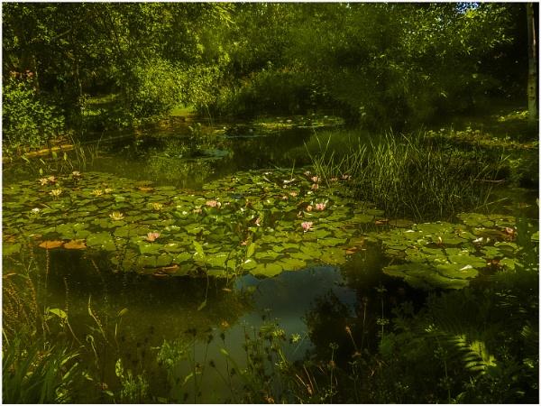 the pond Sudborough Old Rectory garden by derekp