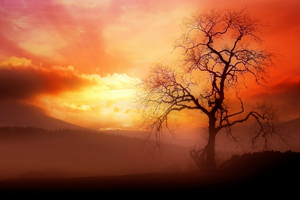 tree in the mist by kenwil