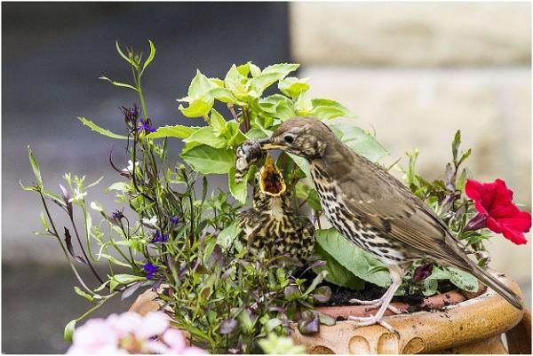 Feeding time by danbrann