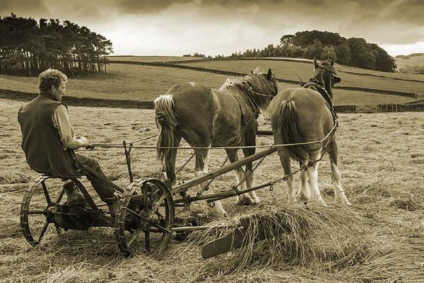 Hay Time. by danbrann