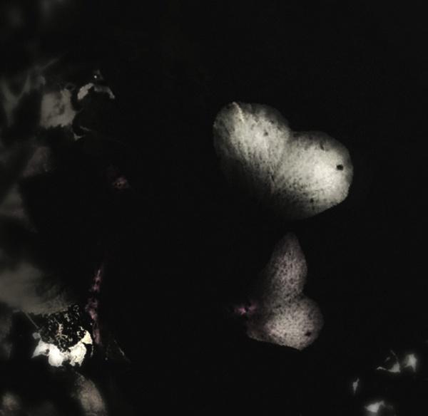 flor de luna by lostrita