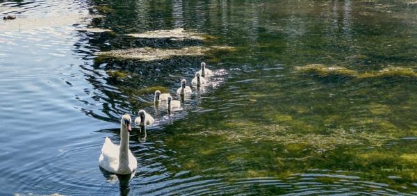 Line Swimming.