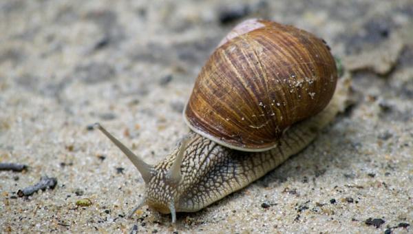 snail on the road by WioletaJ