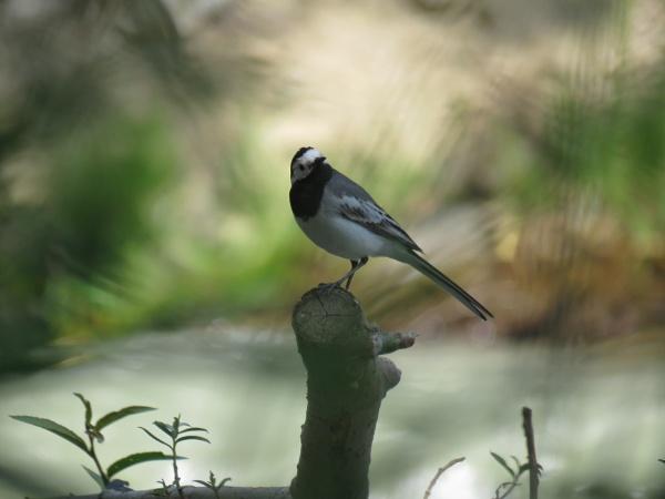 bird watching by shamimsalemi