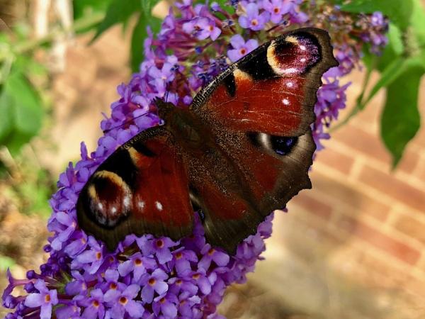 Madam Butterfly by magsyuk