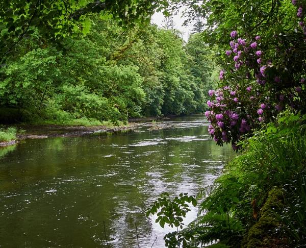 River Teifi by Meditator