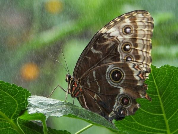 Indoor Rain by ianmoorcroft
