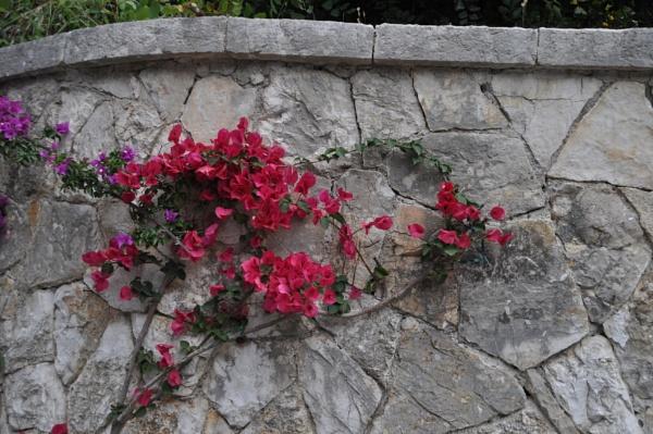 Wall plants... by Chinga