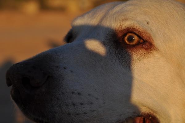 Dog & Shadow !!! by Chinga