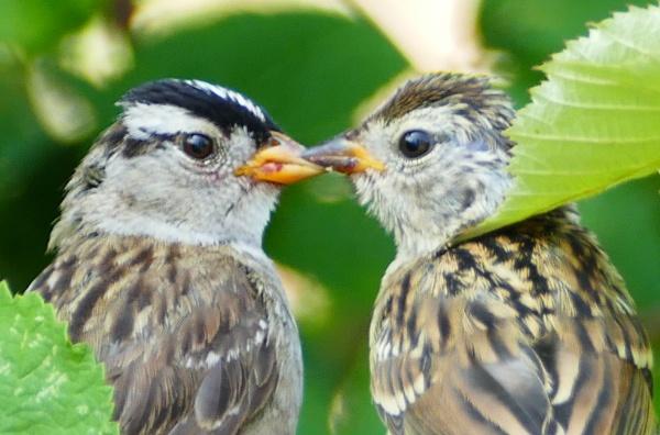 Gossip by tonyguitar
