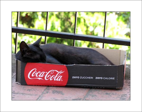 Coca Cola cat by laura1