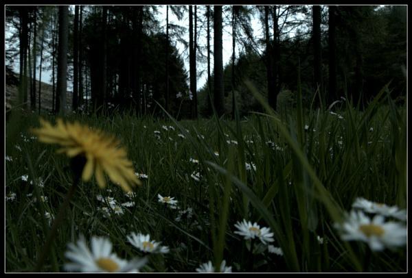 Summer meadows by gunner44