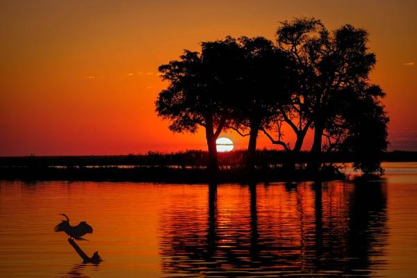 Chobe Flood Plains, Botswana by Prizm