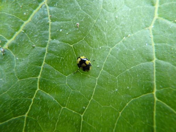 Ladybug by artgaz1062