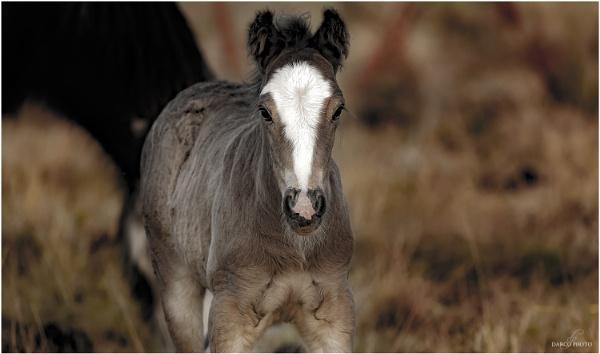 A colt in Haversham by SpiritDarco