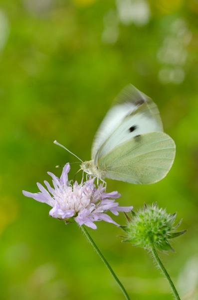 Flutter by falsecast