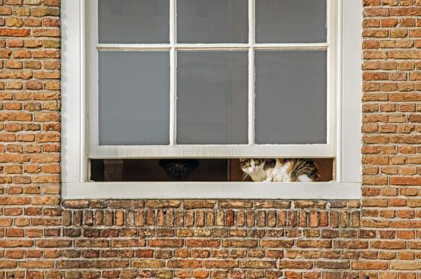 Cat in window by joop_