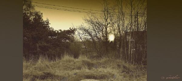 Dawn in the field