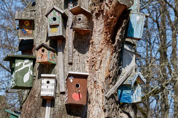Bird House by LotaLota