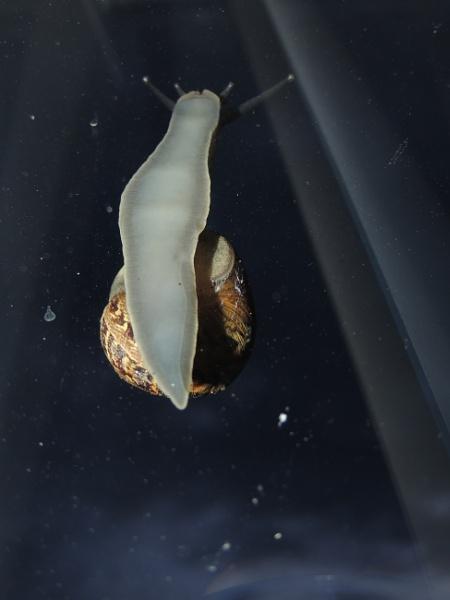 Snail by angler33333