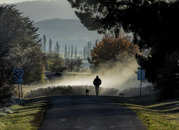 Walking Ewe Home by abeeror2