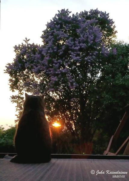 Cat enjoys sunset by jupokoo
