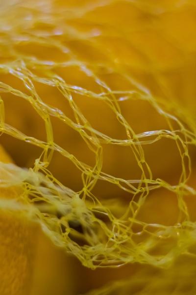 Lemon netting by Madoldie