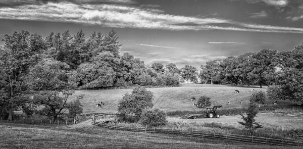Rural  scene by BillRookery