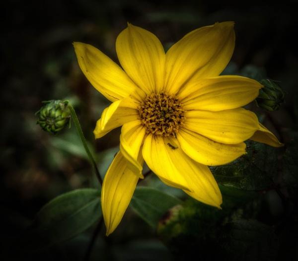 Yellow by BillRookery