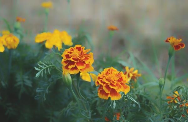 Orange n yellow by KrazyKA