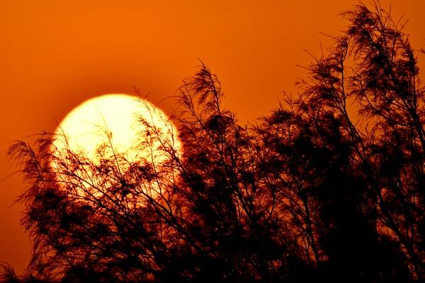 Desert Sunset by Savvas511