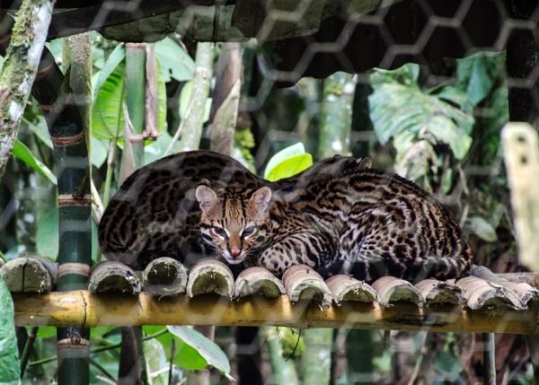 Amazon wildlife park (3) by barryyoungnz