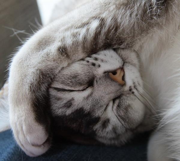 Sleepy by loves2travel