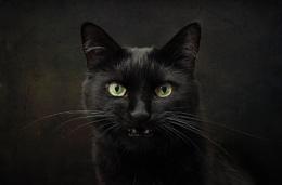 Evil Beastie