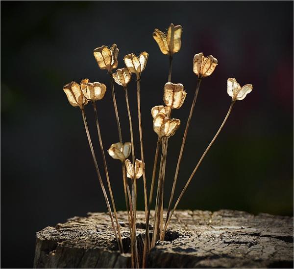 Seedheads by MalcolmM