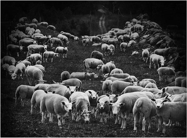 A Gathering by MalcolmM