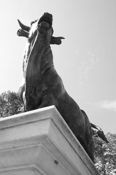 "~ \""The Twin Bull III\"" by LexEquine"