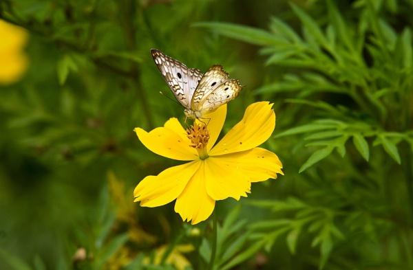A Butterfly Kiss by darrylhp