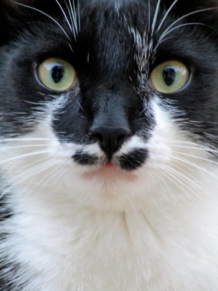 Vic\'s Moustache by SUE118