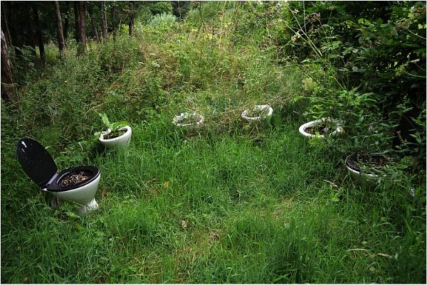 The Bog Garden by johnriley1uk