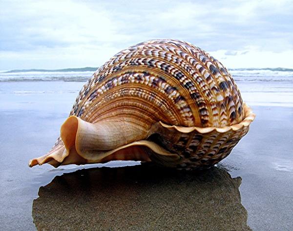 Shell on the beach by MaryFaith