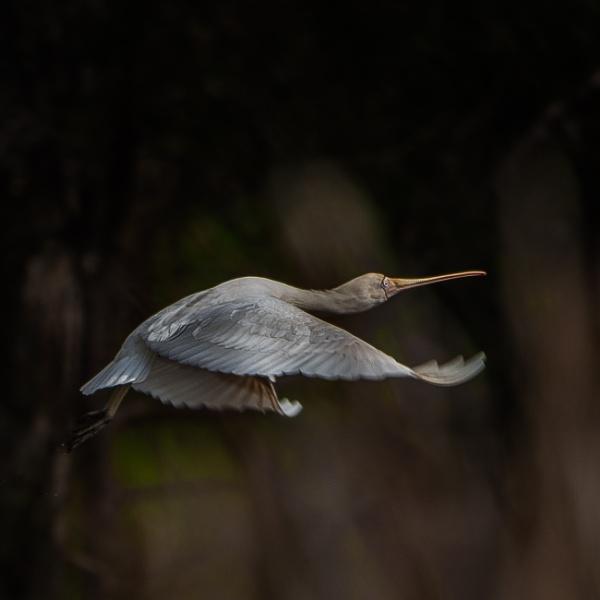 Fly past by Heyneker