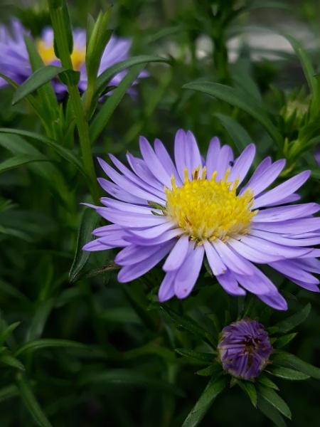 Purple by WilliamEdward