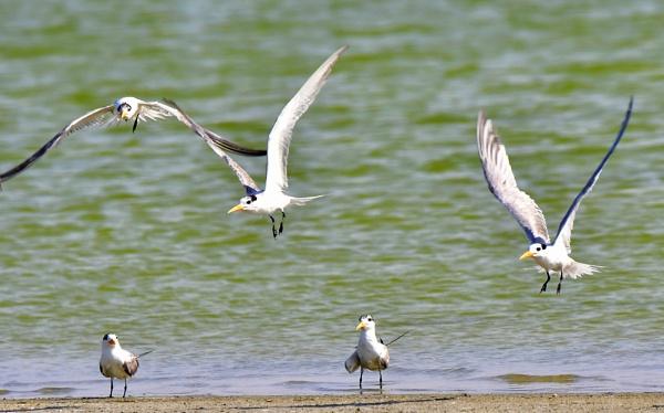Group of Sea Gulls Flying by Savvas511