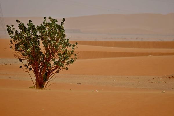 evidence of desert life by Savvas511